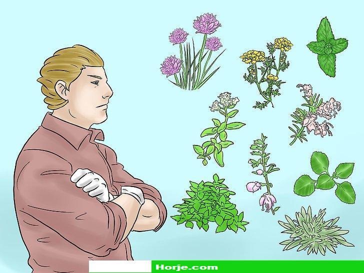 How to Grow Herbs Indoors Under Lights