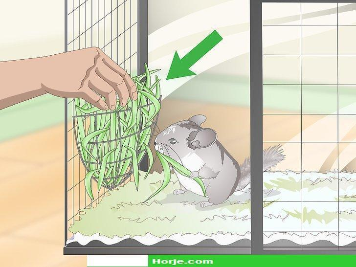 How to Supplement Nutrients in Your Chinchilla's Diet