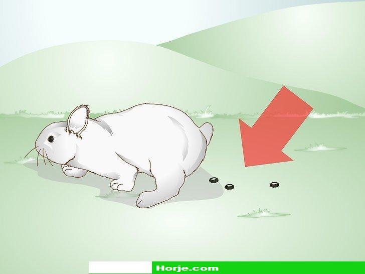 How to Care for a Rabbit with GI Stasis