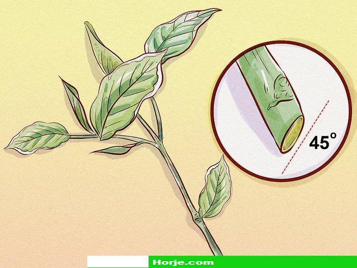 How to Prune Weigela