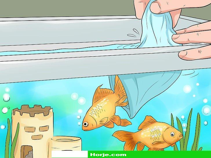 Image titled Make Aquarium Setups Stand Out Step 7