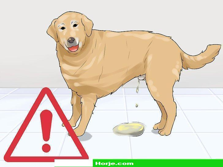 How to Determine Whether to Diaper a Senior Dog