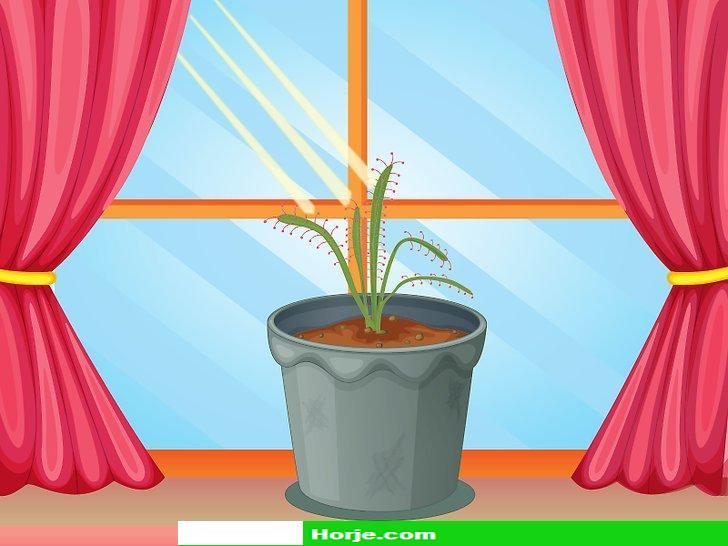 How to Raise Carnivorous Plants