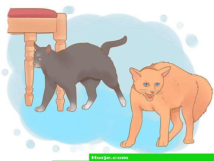 How to Keep a Pet When You Have Cats