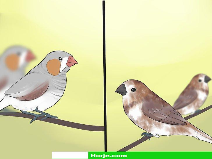How to Keep Finches with Other Bird Species
