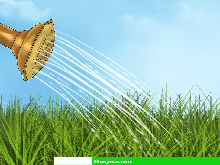 How to Prevent Mildew on Plants