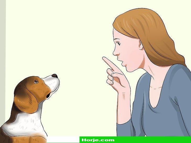 How to Deal with Having a Visually Impaired Dog