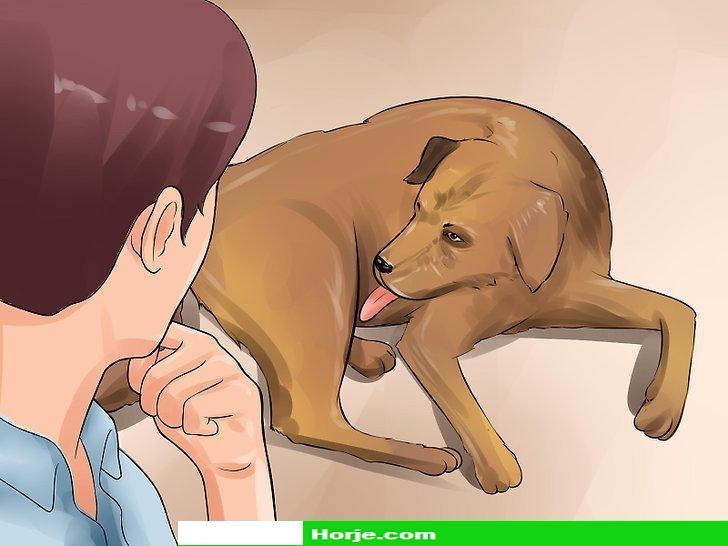 Image titled Detect Canine Bladder Stones Step 5
