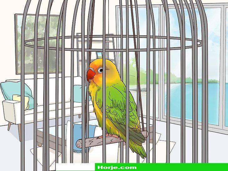 How to Treat Lovebirds with Psittacine Beak and Feather Disease
