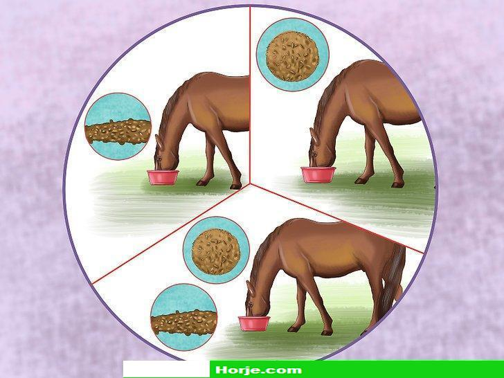 How to Keep a Horse Happy
